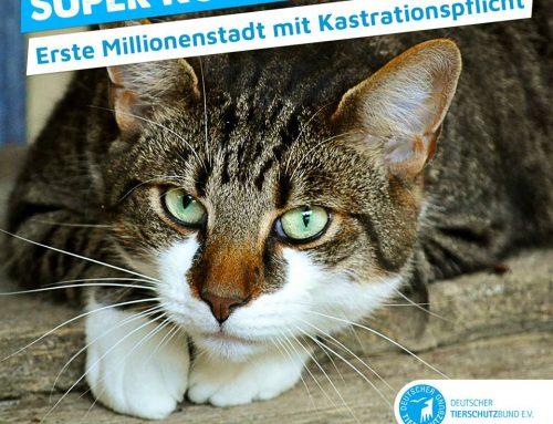 Katzenschutz-Verordnung