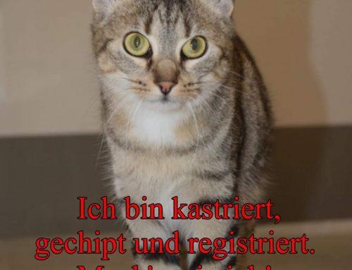 Katzenschutzverordnung, informieren Sie sich